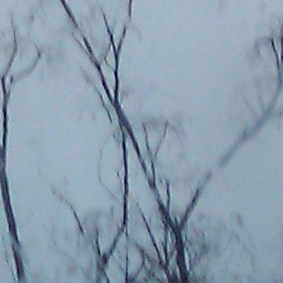I took this when it is raining that day to show the sadness of how the rainy dead trees.