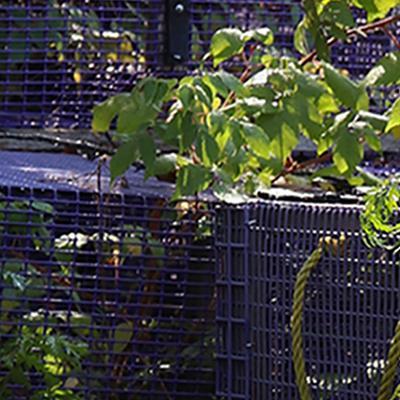 Purple lobster traps