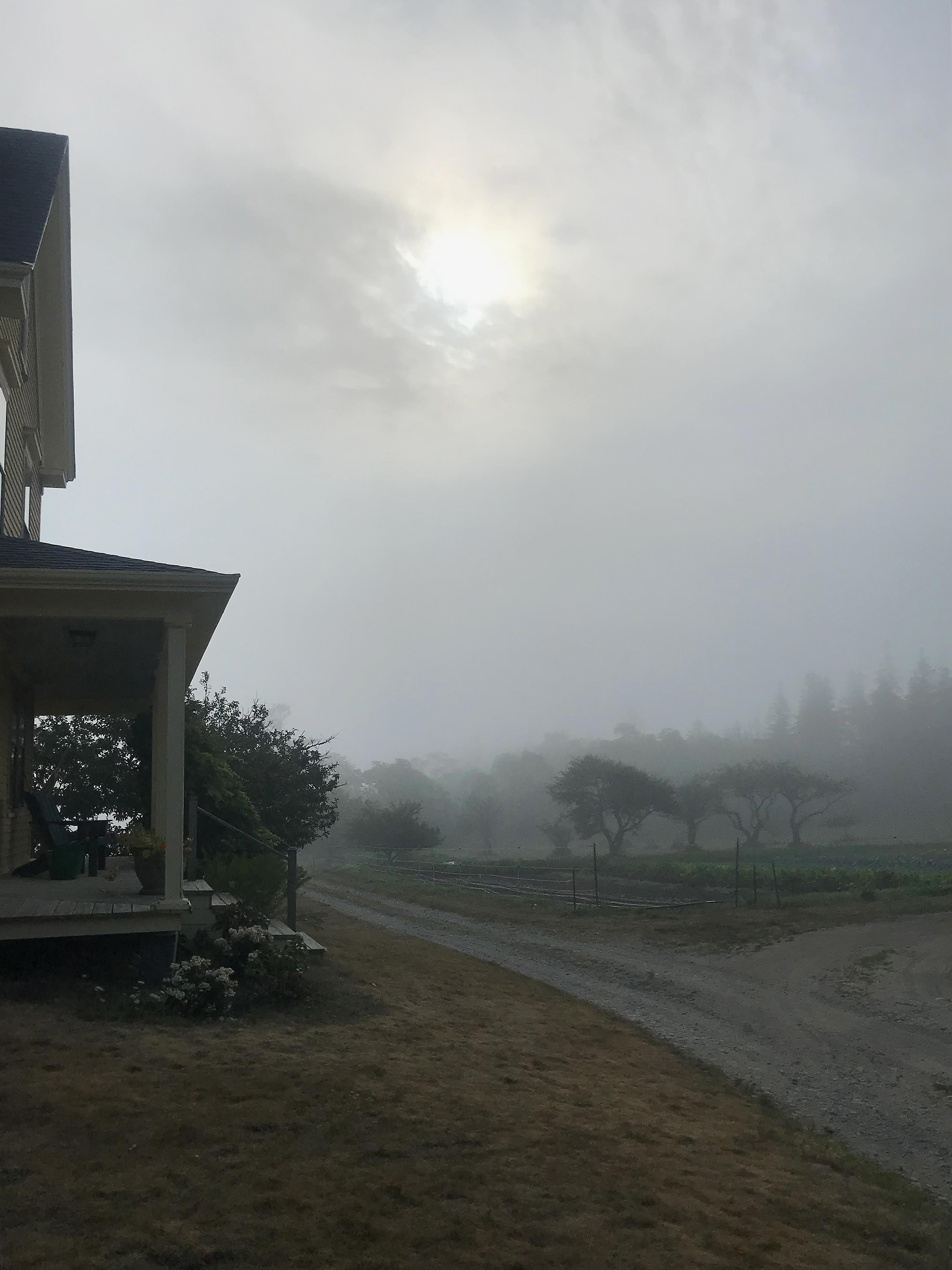 Fog on farm