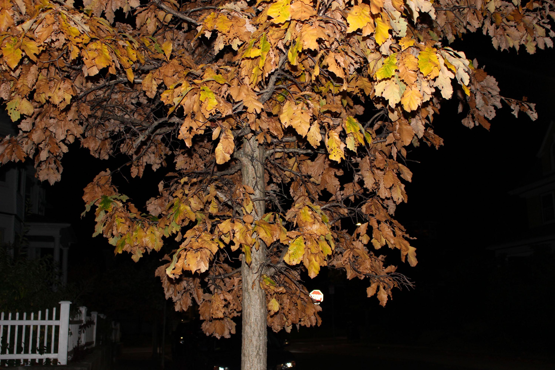 Every Leaf Falls