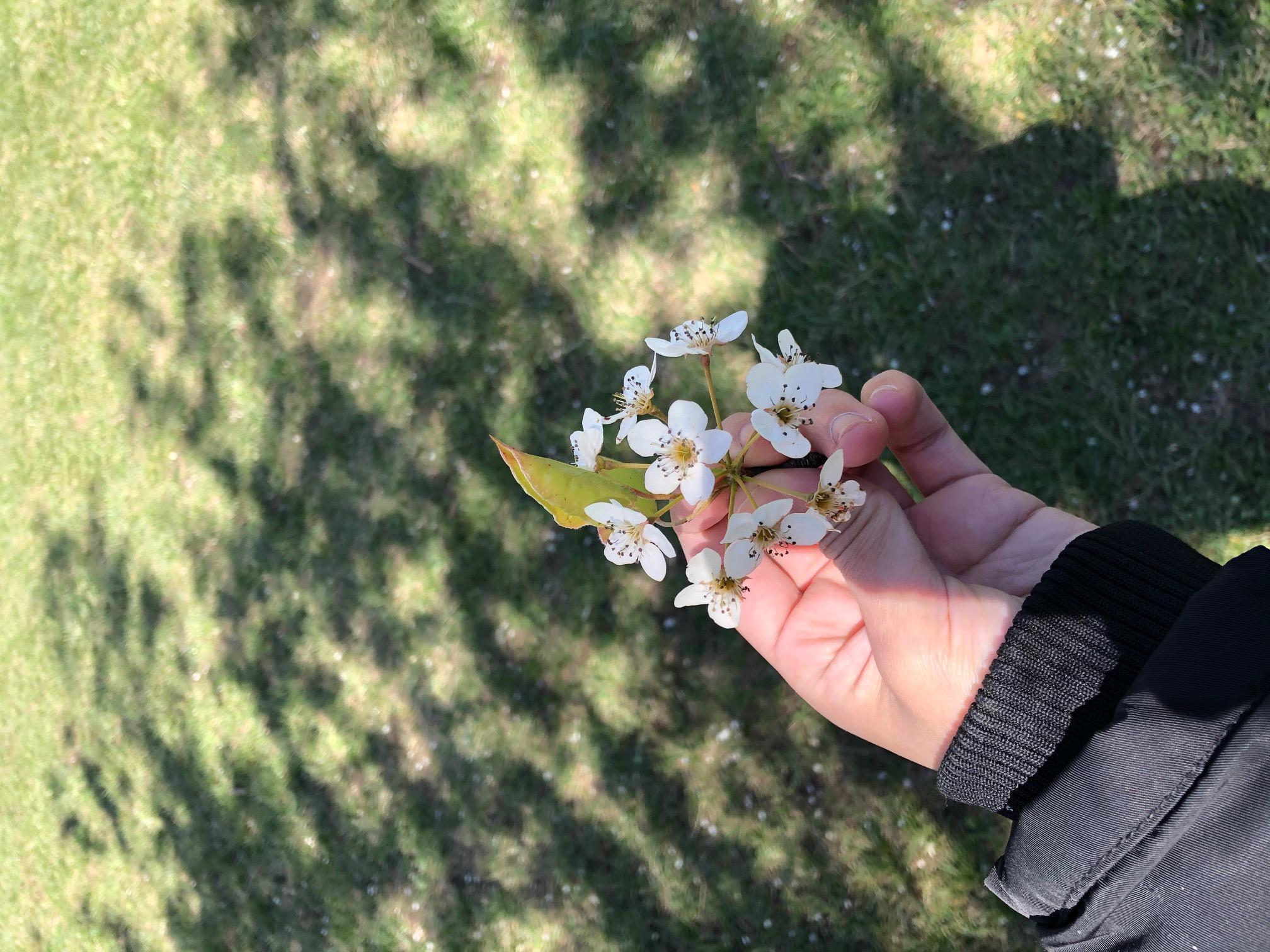 flower with shadow.JPG
